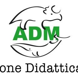 Associazione Didattica Museale